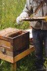 Geschnittenes Bild eines Imkers, der Bienenstöcke im Feld hält und untersucht — Stockfoto