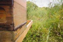 Primer plano de las abejas melíferas en la colmena del campo - foto de stock