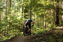 Visão traseira do ciclista masculino pedalando na floresta em um dia ensolarado — Fotografia de Stock