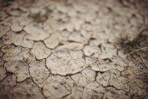 Primo piano di terra secca screpolata marrone — Foto stock