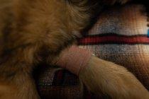 Kreppverband am Hundeschwanz in Tierklinik — Stockfoto