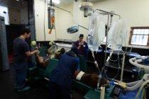 Chirurgiens opérant un cheval en salle d'opération à l'hôpital — Photo de stock