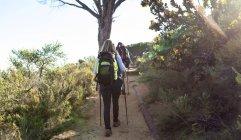 Вид сзади на взрослую белую женщину и мужчину в рюкзаках и с помощью скандинавских тростей, идущих по тропе во время похода — стоковое фото