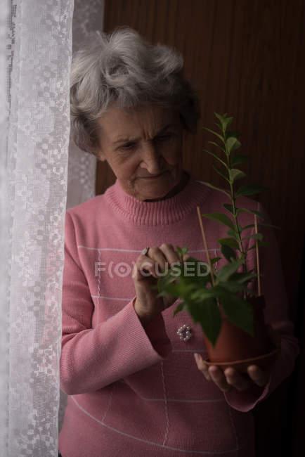Senior woman checking a plant at home — Stock Photo