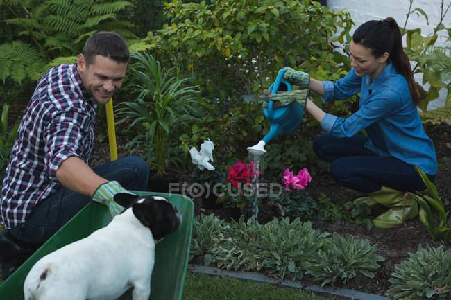 Jovem casal com buldogue francês plantando flores no jardim — Fotografia de Stock