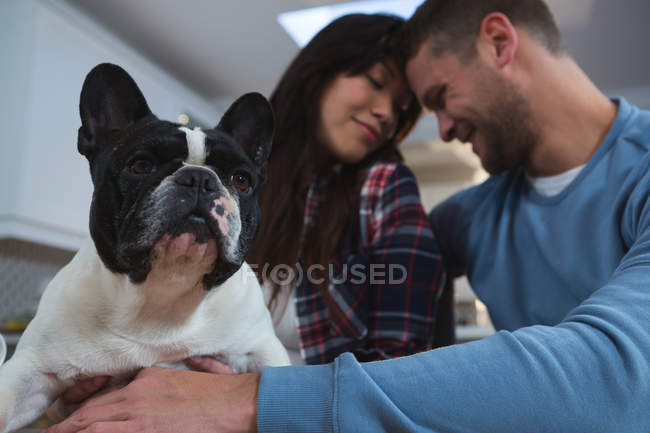 Romantic couple playing with their pet dog in kitchen at home — Stock Photo