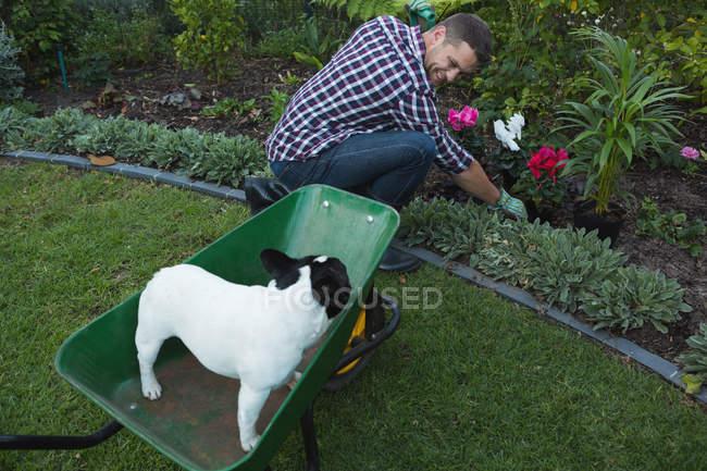 Glücklicher Mann pflanzt eine Pflanze im Garten — Stockfoto