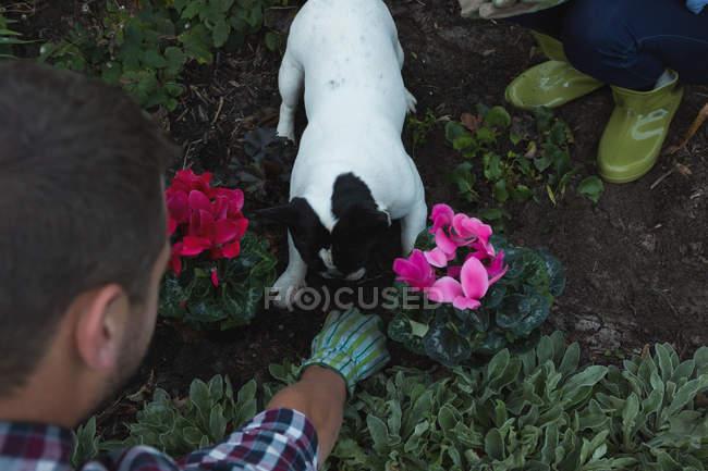 Primo piano di coppia piantare una pianta in giardino — Foto stock