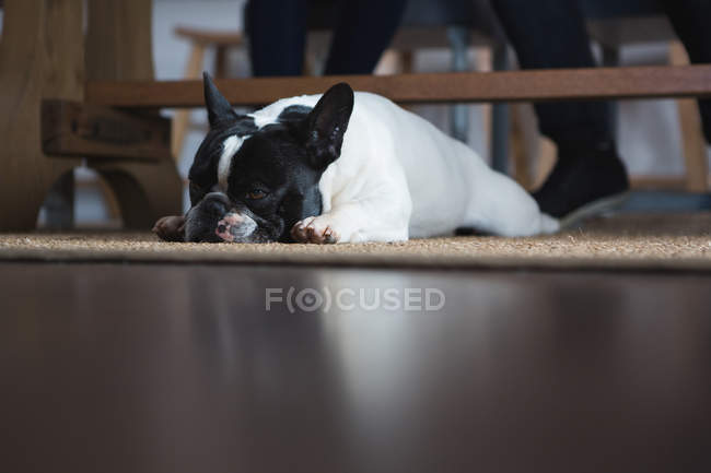 Close-up of dog lying on floor mat at home — Stock Photo