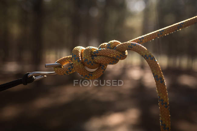 Close-up of tied hammock strap in forest — Stock Photo