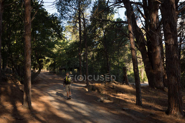 Rear view of male hiker with backpack walking in forest road — Stock Photo