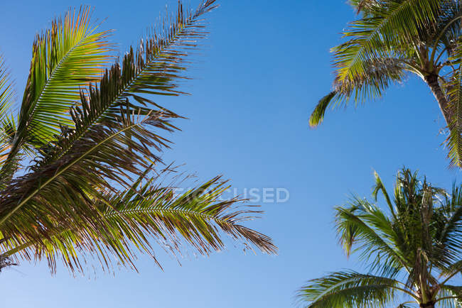 Palm trees in the beach on a sunny day — Stock Photo