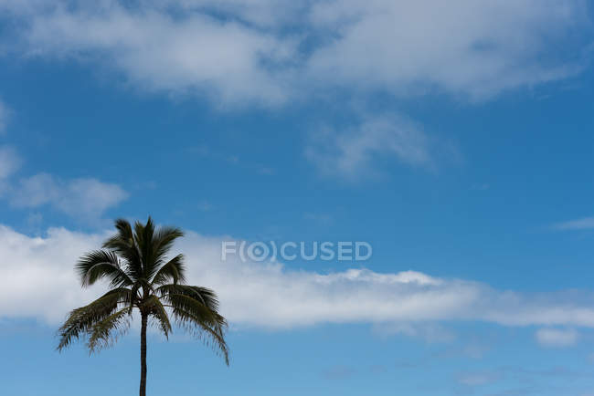 Дерево пальми проти небо та хмари на сонячний день — стокове фото
