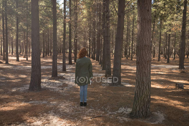 Rear view of woman standing in the forest path — Stock Photo