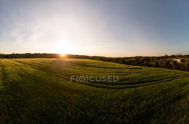 Вид на зеленое поле во время заката, провинция Манстер — стоковое фото