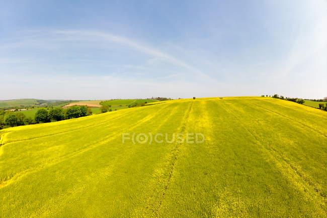 Blick auf das Feld am Hang an einem sonnigen Tag — Stockfoto