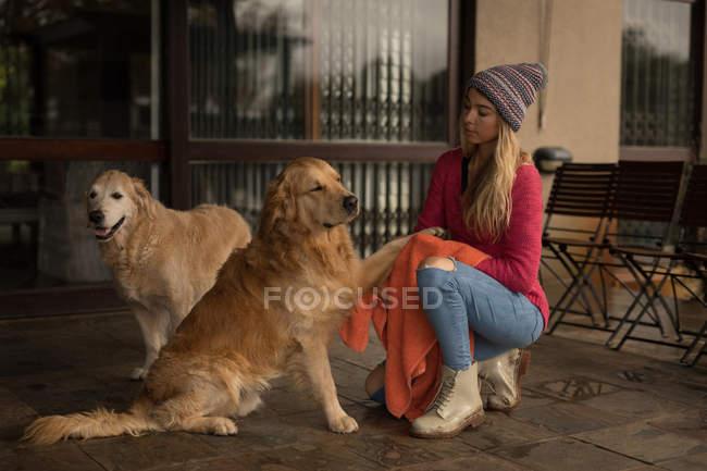 Mädchen spielt mit ihren Hunden auf der Veranda zu Hause — Stockfoto