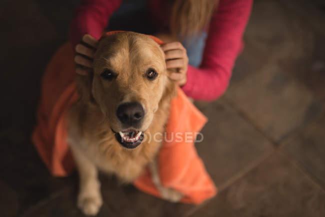 Teenager-Mädchen putzt Leiche von Hund zu Hause — Stockfoto