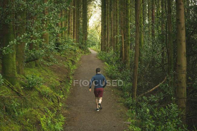 Задний вид человека бег трусцой в пышном лесу — стоковое фото