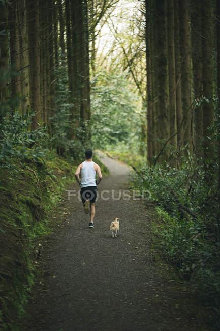 Vista posteriore dell'uomo che fa jogging con il suo cane in una foresta lussureggiante — Foto stock