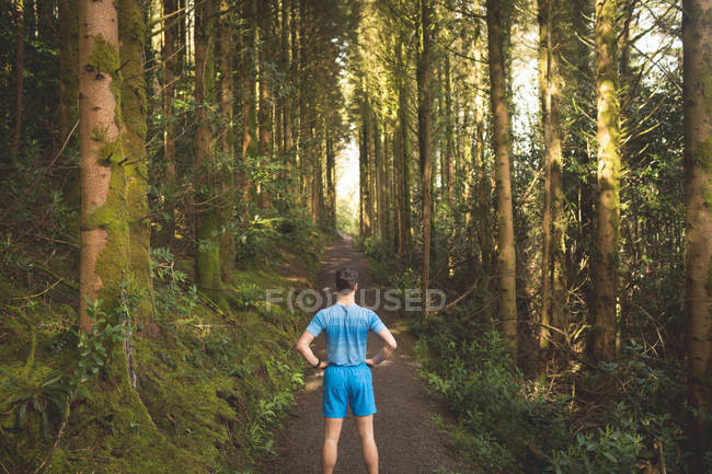 Rear view of man standing in forest on a sunny day — Stock Photo