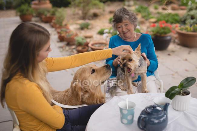 Внучка и бабушка ласкают собаку на заднем дворе — стоковое фото