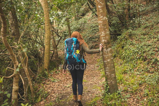 Rear view of female hiker with backpack hiking in the forest — Stock Photo