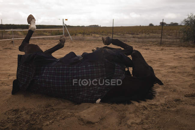 Domestiziertes Pferd auf der Ranch — Stockfoto
