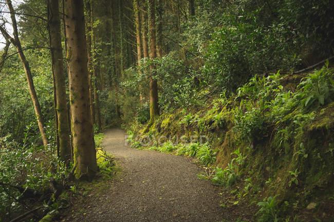 Пустой трек, проходя через густые леса — стоковое фото