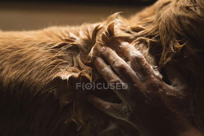 Nahaufnahme eines Mädchens beim Putzen eines Hundes im heimischen Badezimmer — Stockfoto