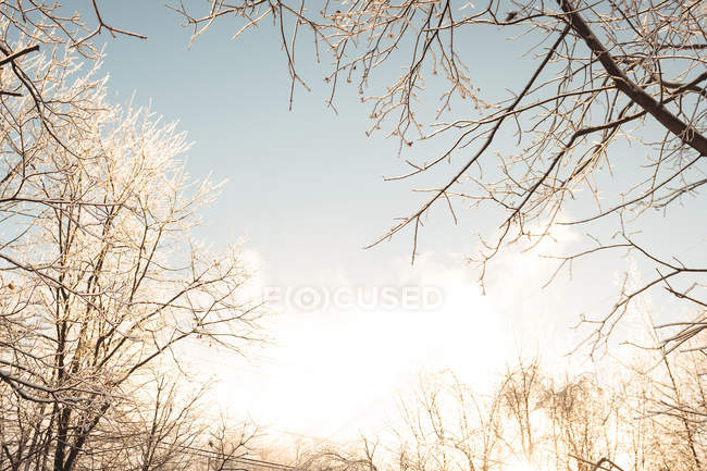 Bare tree against bright sunlight — Stock Photo