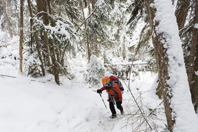 Scalatore femminile che cammina nella foresta innevata durante l'inverno — Foto stock