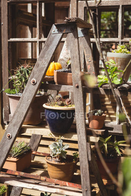 Pot plants on wooden table in garden — Stock Photo