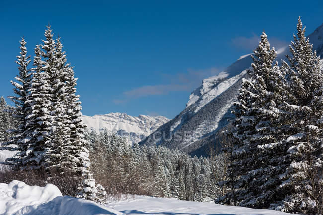 Snow-capped mountains and woodland during winter in Revelstoke, British Columbia, Canada — Stock Photo