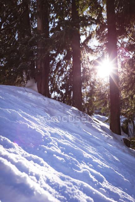 Luz del sol pasa a través del bosque durante el invierno - foto de stock