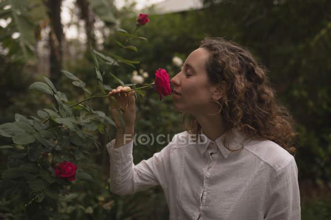 Вид сбоку на пахнущую красной розой женщину в саду — стоковое фото