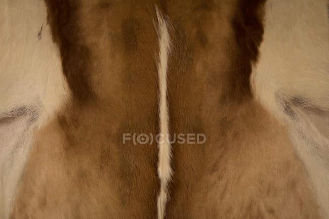 Close-up of animal body part in safari park — Stock Photo