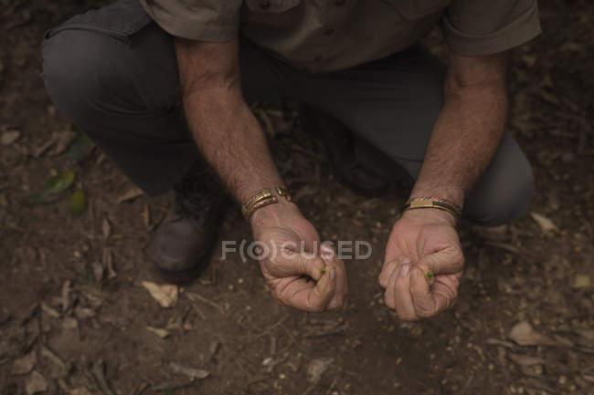 Faible proportion de l'agriculteur exploitant des semences dans l'exploitation — Photo de stock