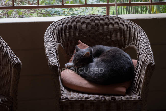 Cat relaxing in the chair at home — Stock Photo