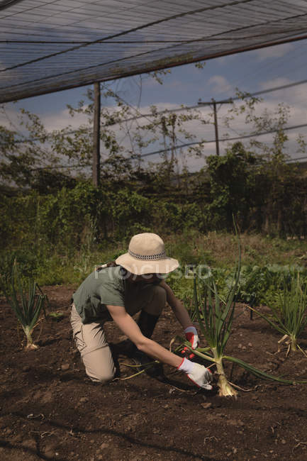Farmer placing plant into soil in greenhouse — Stock Photo
