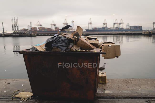 Сідати на контейнер для сміття в верф чайок — стокове фото