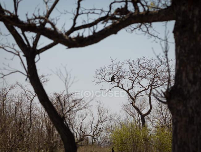 Macaco sentado na árvore nua no safari park — Fotografia de Stock