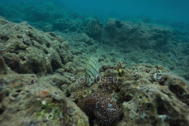 Poissons sauvages nageant par récif corallien sous-marin — Photo de stock