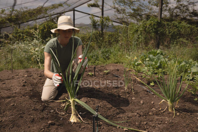 Farmer placing plant into soil in greenhouse — Stockfoto