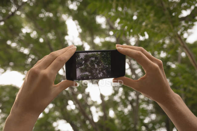 Close-up of woman taking photo of tree with mobile phone — Stock Photo