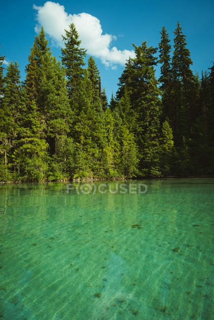 View of lake on a sunny day — Stock Photo