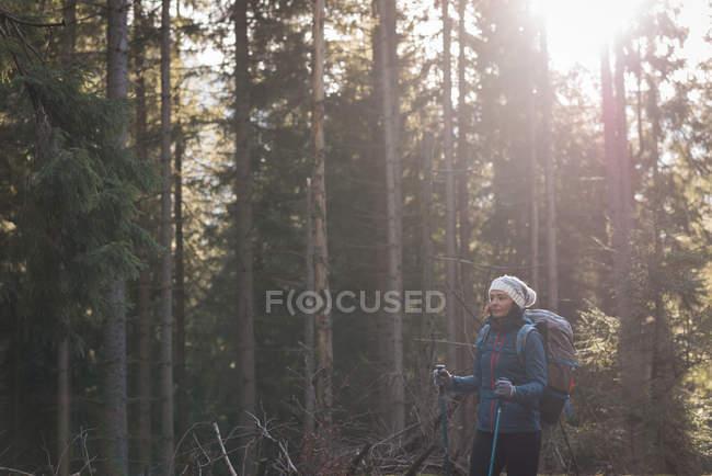 Caminhante feminina em pé na floresta em um dia ensolarado — Fotografia de Stock