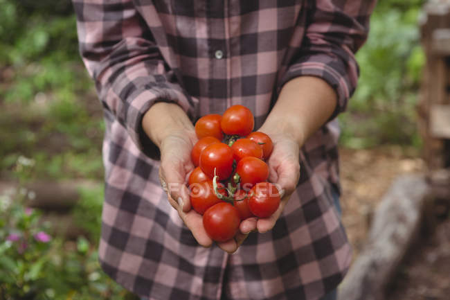 Mid section of woman holding fresh tomatoes in garden — Stock Photo