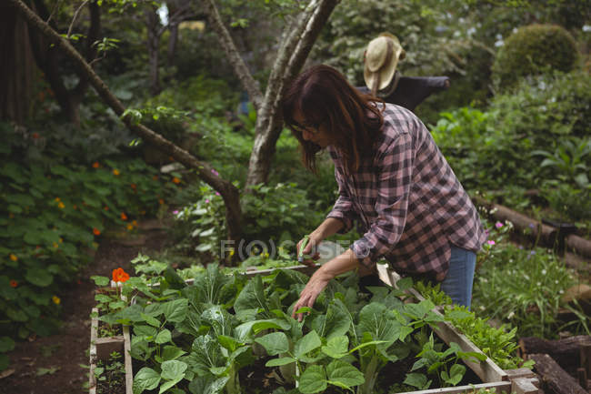 Mid section of woman spraying water on plants in garden — Stock Photo