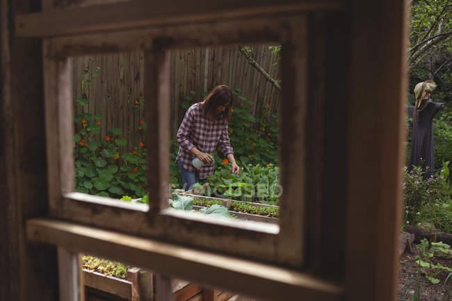 Woman watering plants in garden — Stock Photo